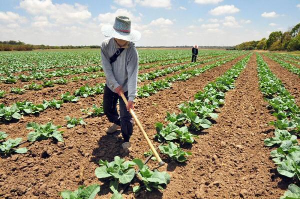 Agricultura promissora