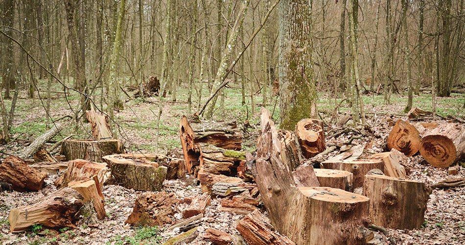 Desmatamento, crédito e incentivos
