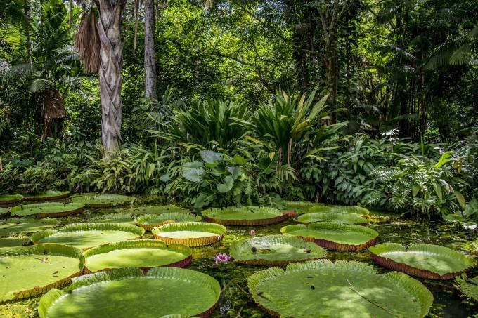 O mito da cobiça na Amazônia